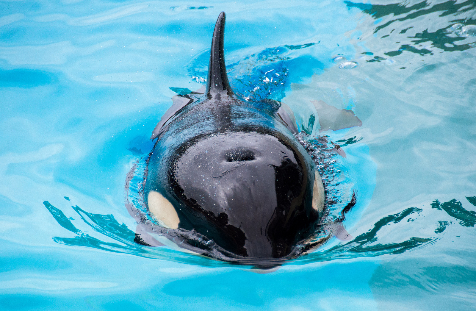 How Did We Get Here? The Development of Marine Captivity in the U.S.