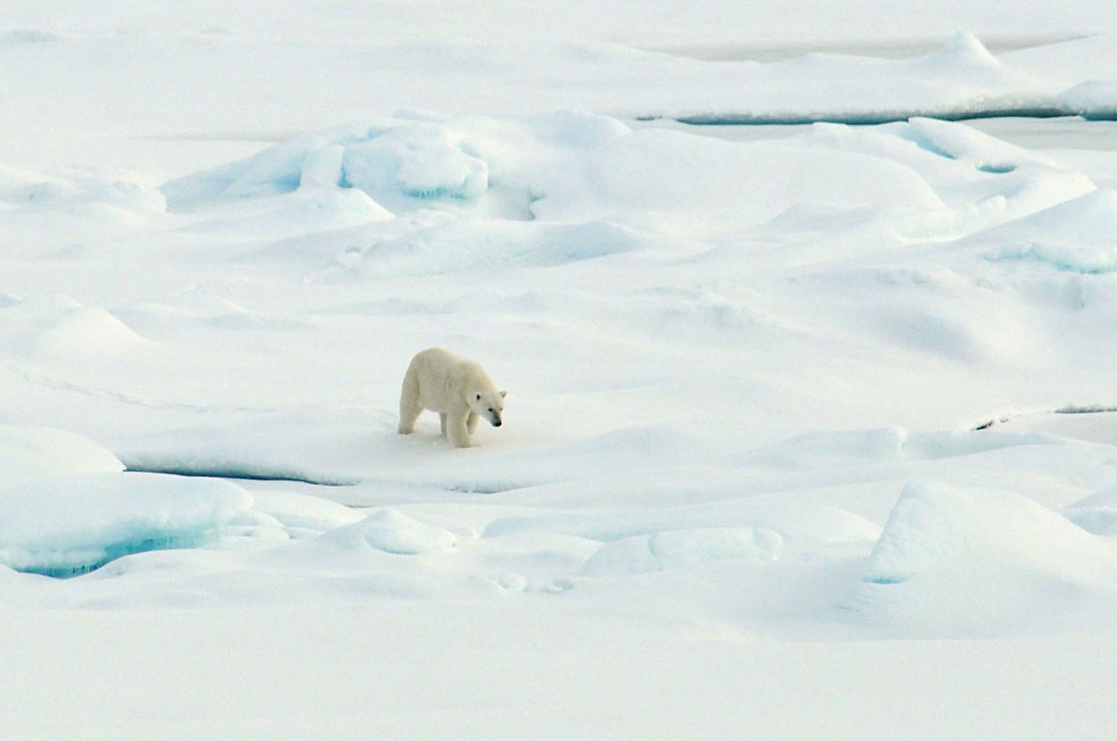 Christine Hodgdon: How Saving Our Rainforests Could Determine the Fate of the Polar Bear Species