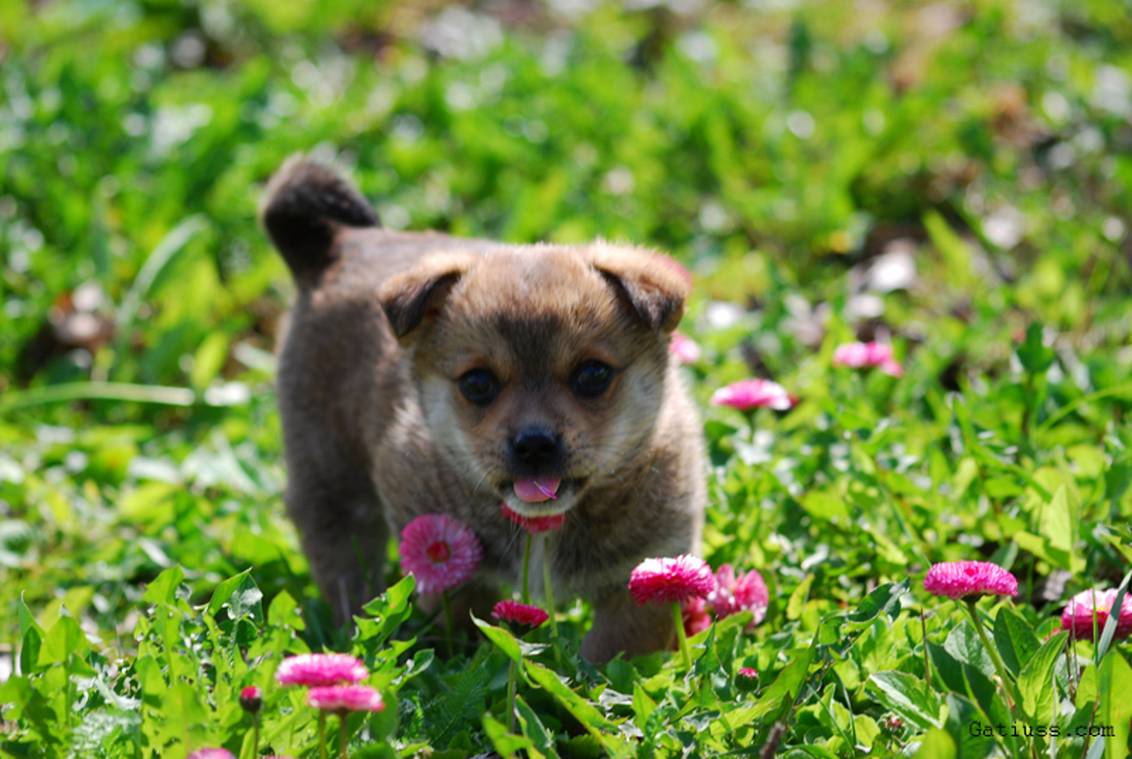 Holistic Pet Health: Tips You Can Trust
