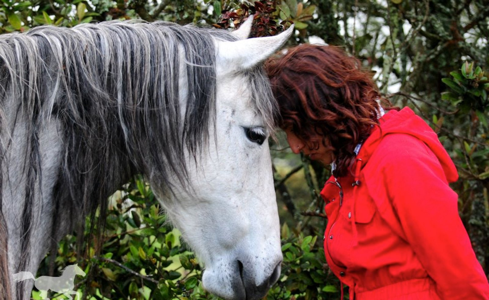 Juliana's Animal Sanctuary; Making a Difference in the Most Unlikely Place