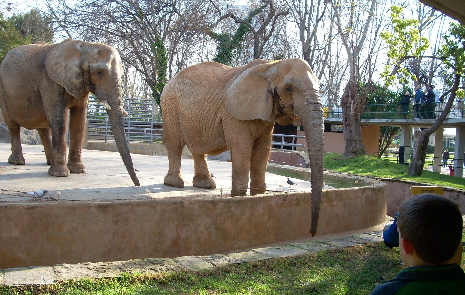 Wild Animals Held in Captivity for Tourism