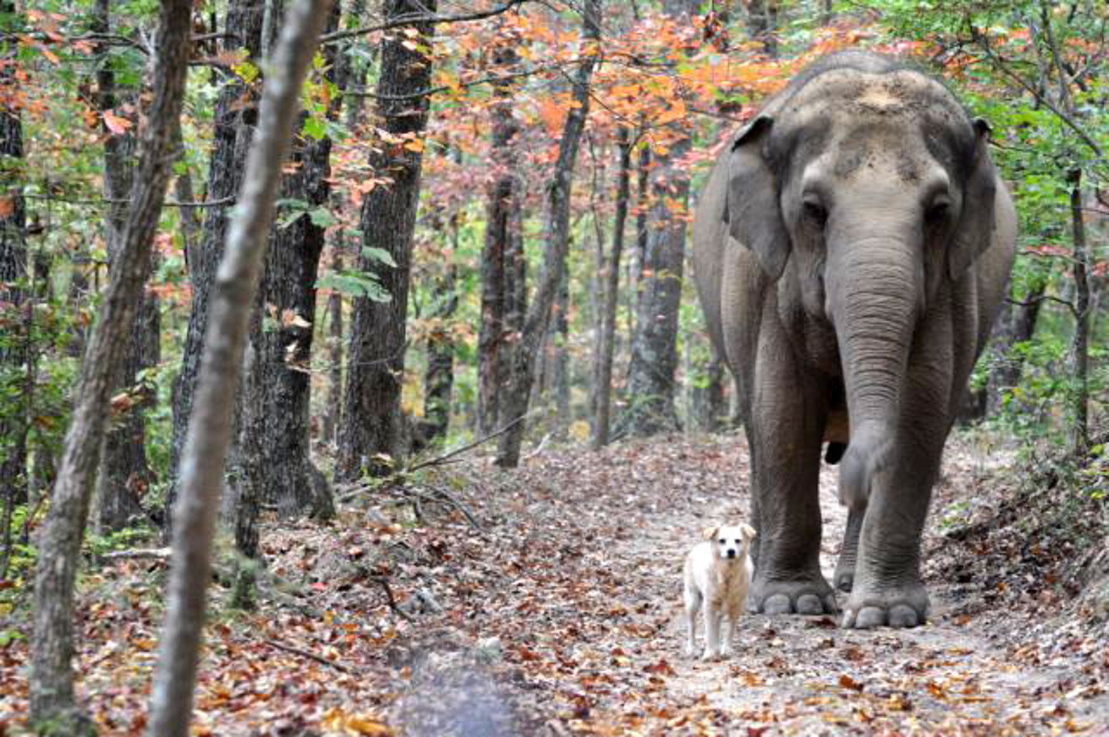 Animal Friendships: They're Just Like Us!