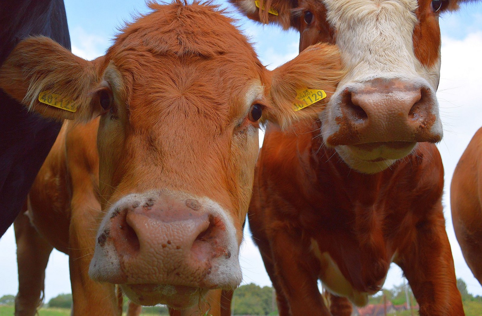 10 Insane Facts About Our Reliance on Cows