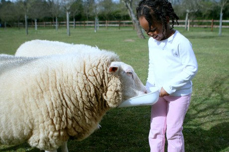 Farm Sanctuary Programs Teach Kids Compassion for All Animals