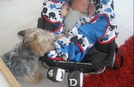 Protective Dog Tucks in Her Baby Human Sibling