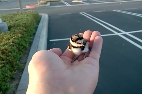Baby Bird Trapped in Pipe is Reunited With Parents
