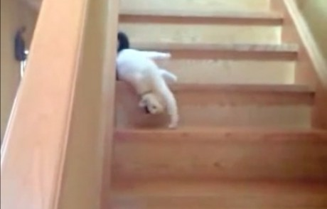 Cat Who's Not Very Excited to Start the Day Literally Drags Himself Down a Flight of Steps