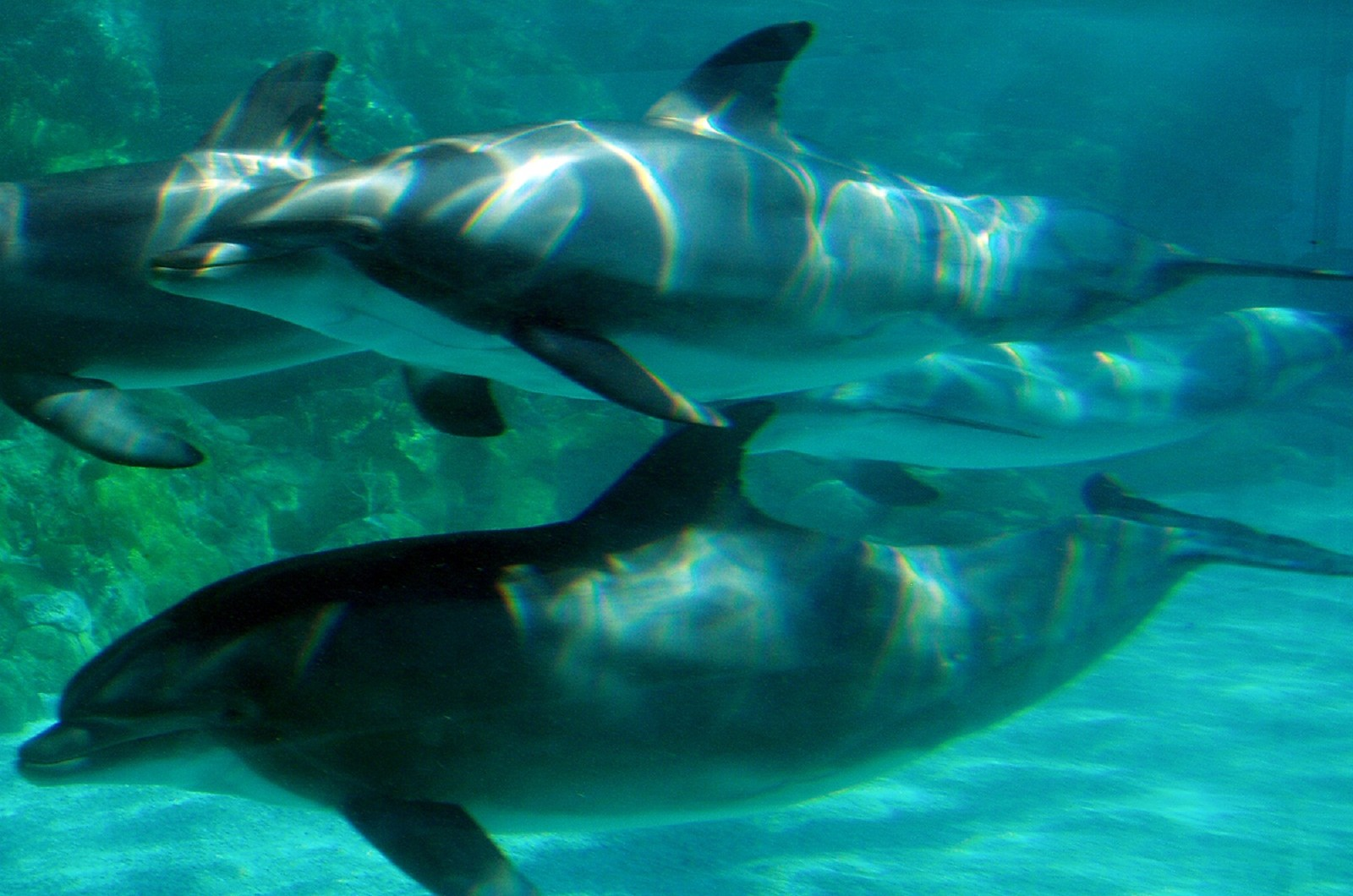 This Amazing European Coalition is Fighting for a Captive Dolphin-Free Europe