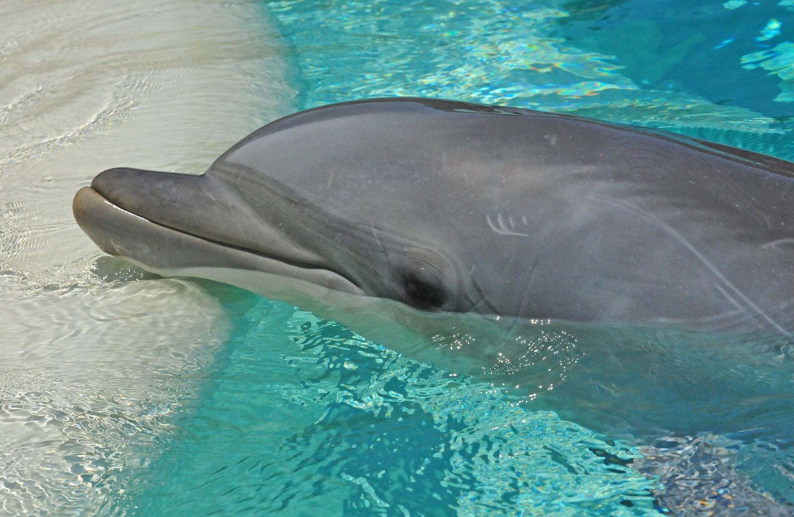 The Shocking Role the World Zoo Association Plays in Taiji Dolphin Hunts