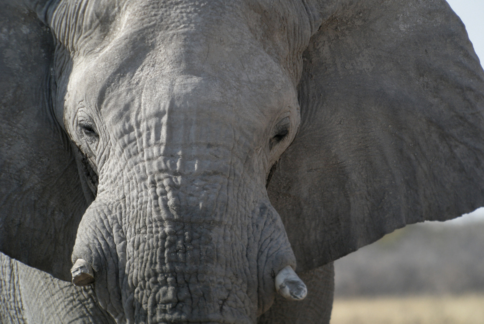 It is Our Responsibility to Save the Elephants... Again