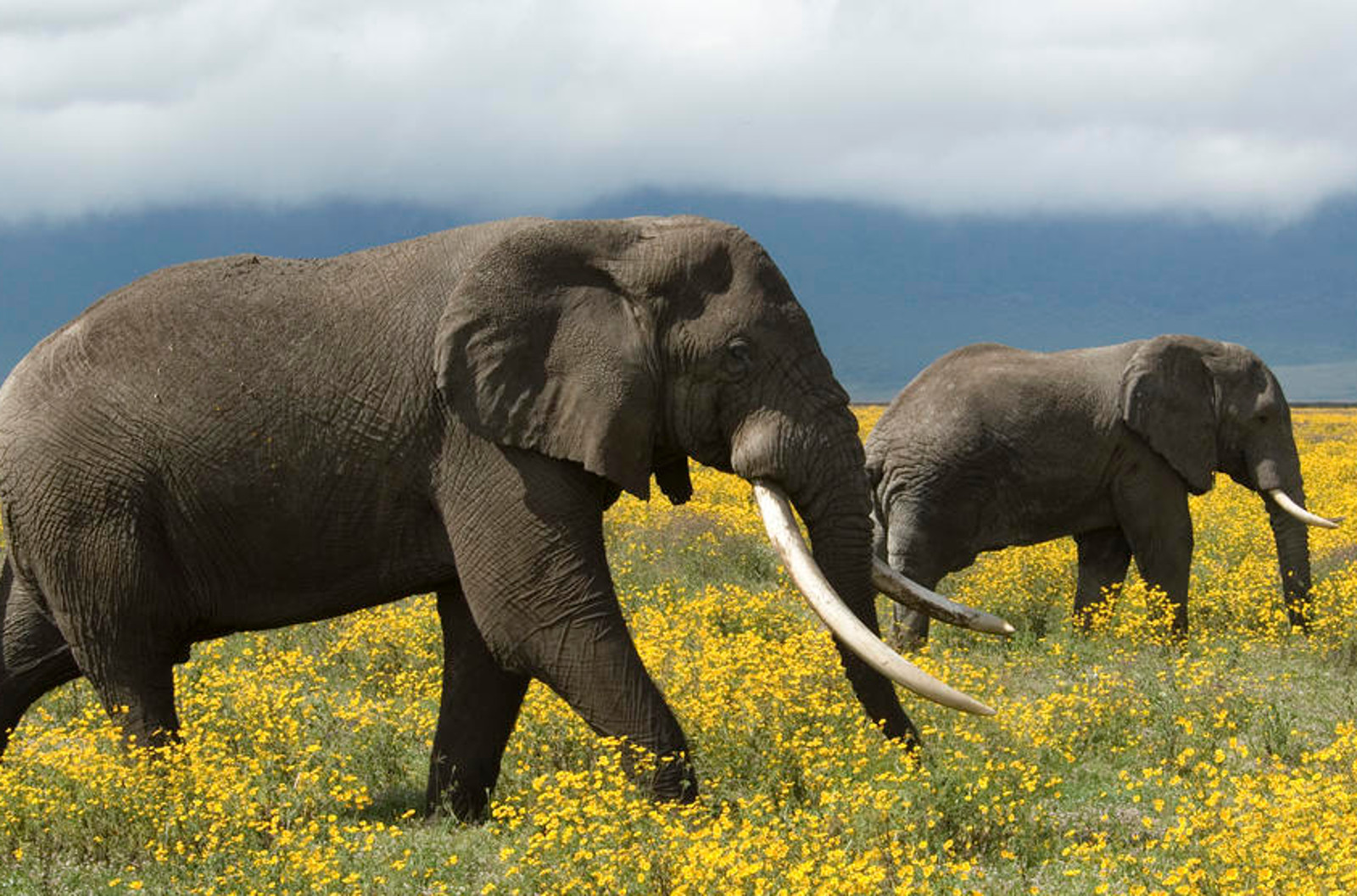 6 Super Creative Anti-Poaching Tactics That Just Might Save The World's Most Endangered Species