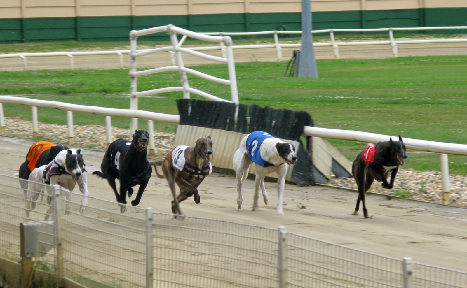 The Shocking Cruelty Lurking Behind the Greyhound Racing Industry