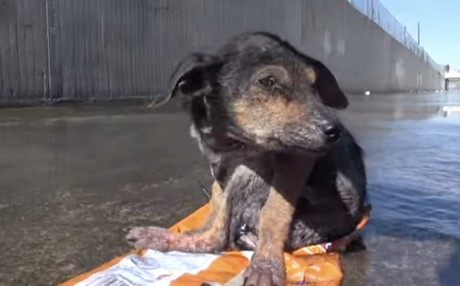 Dog rescued from river