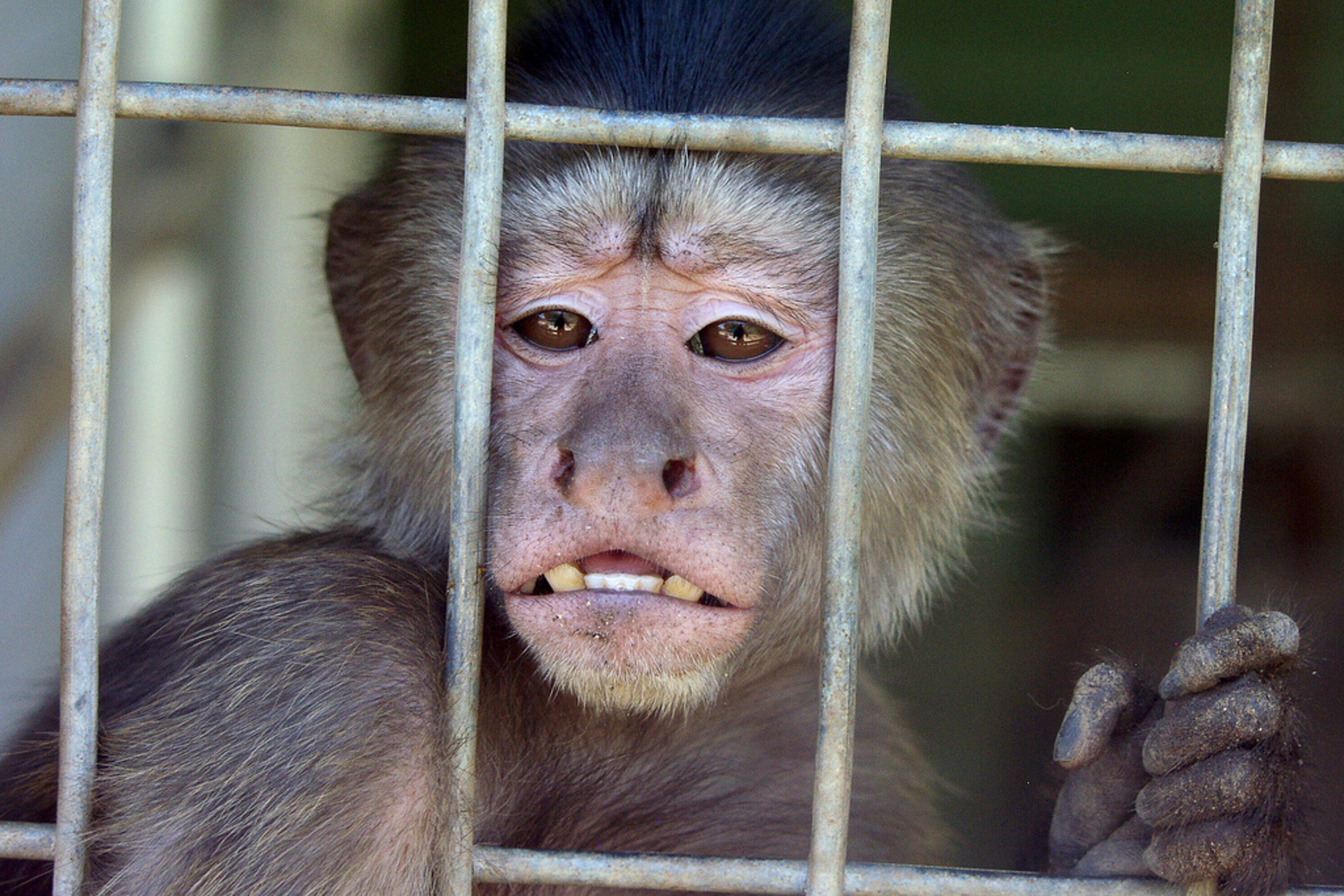 Drop This Class: 6 Universities Who Conduct Cruel Animal Research and Testing