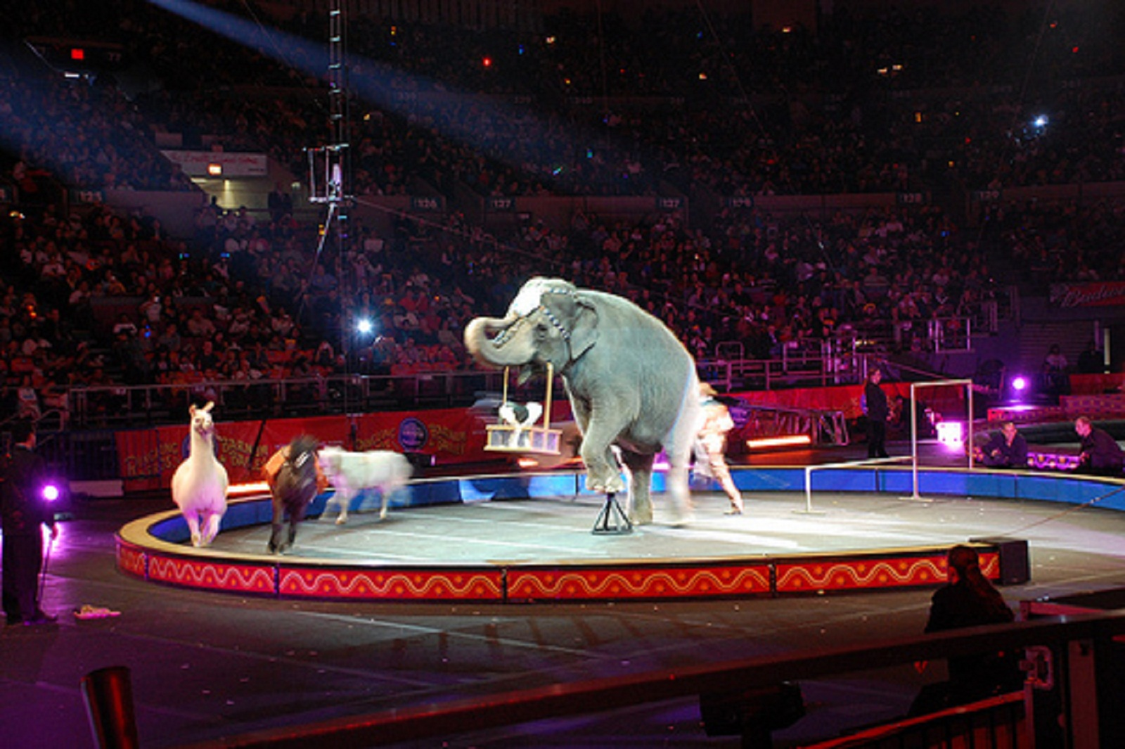 If Ringling Bros. Cares About Animals, Here are 4 Things They Should Do Next