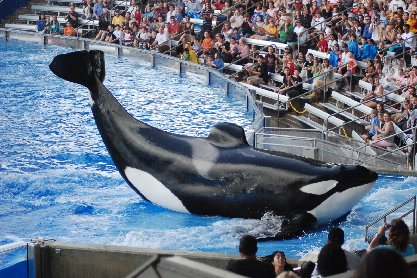 5 Amazing Times Children Protested Dolphin and Orca Captivity