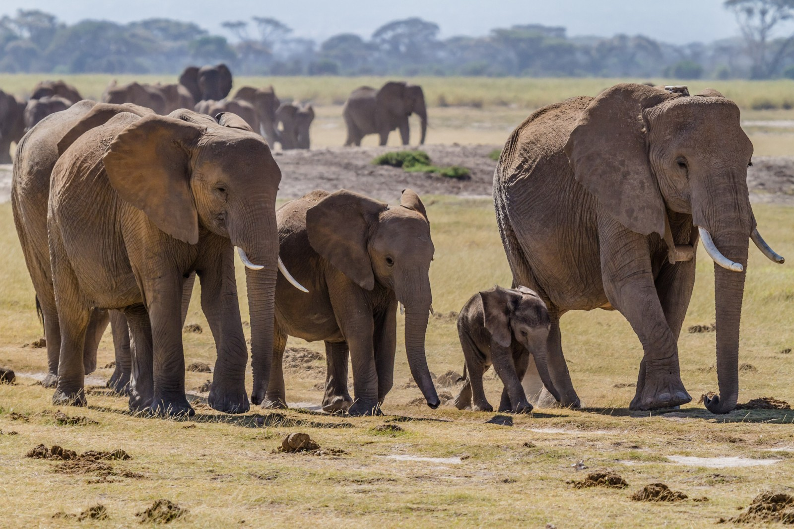 5 Tear-Jerking Videos That Prove Elephants Are as Emotional as We Are