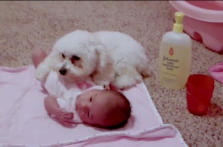 Devoted Dog Protects Human Baby From Hair Dryer
