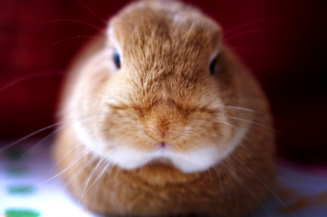 Are Rabbits Good Pets for Kids?