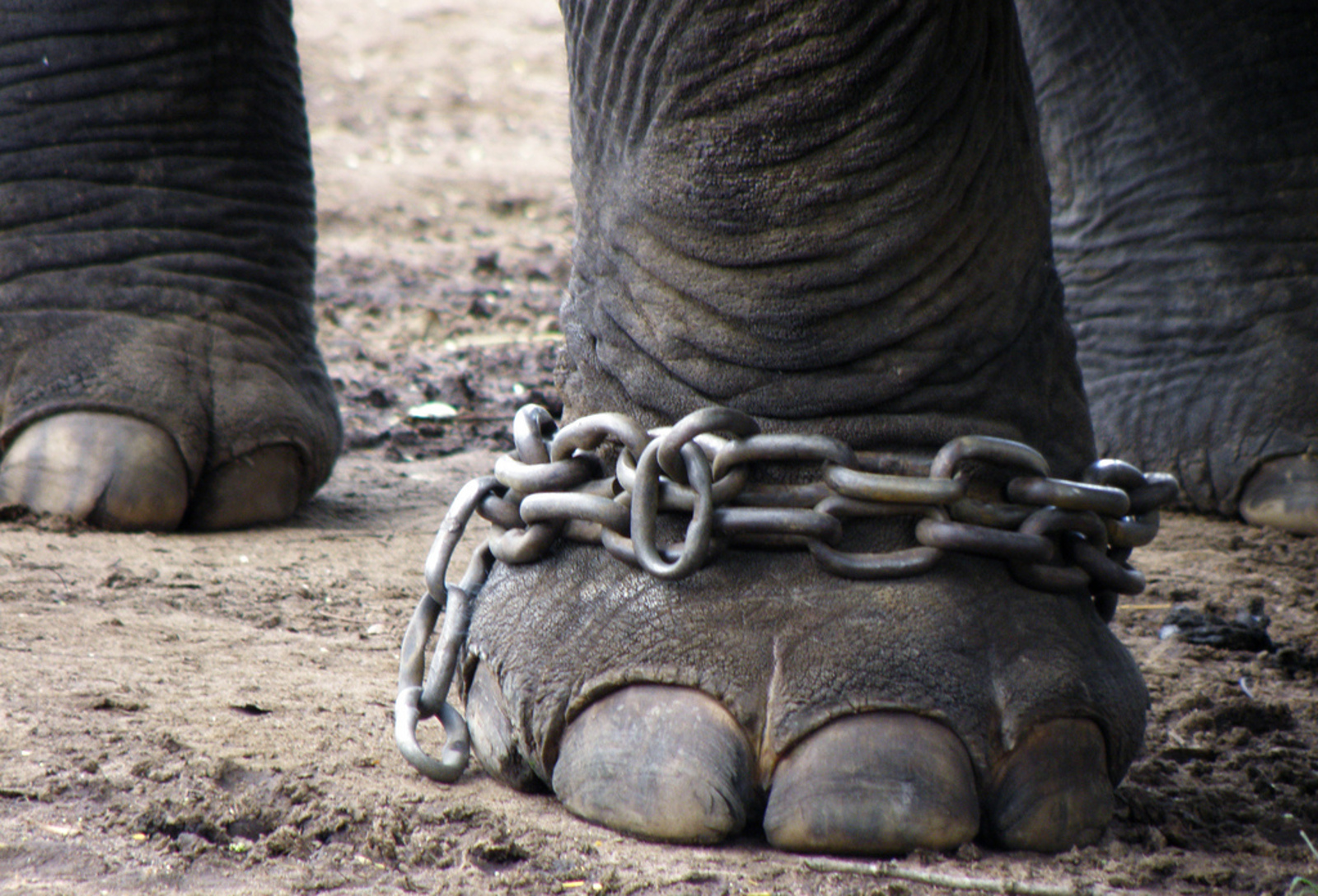 What Would the World Look Like if We Granted Legal Personhood to Animals?