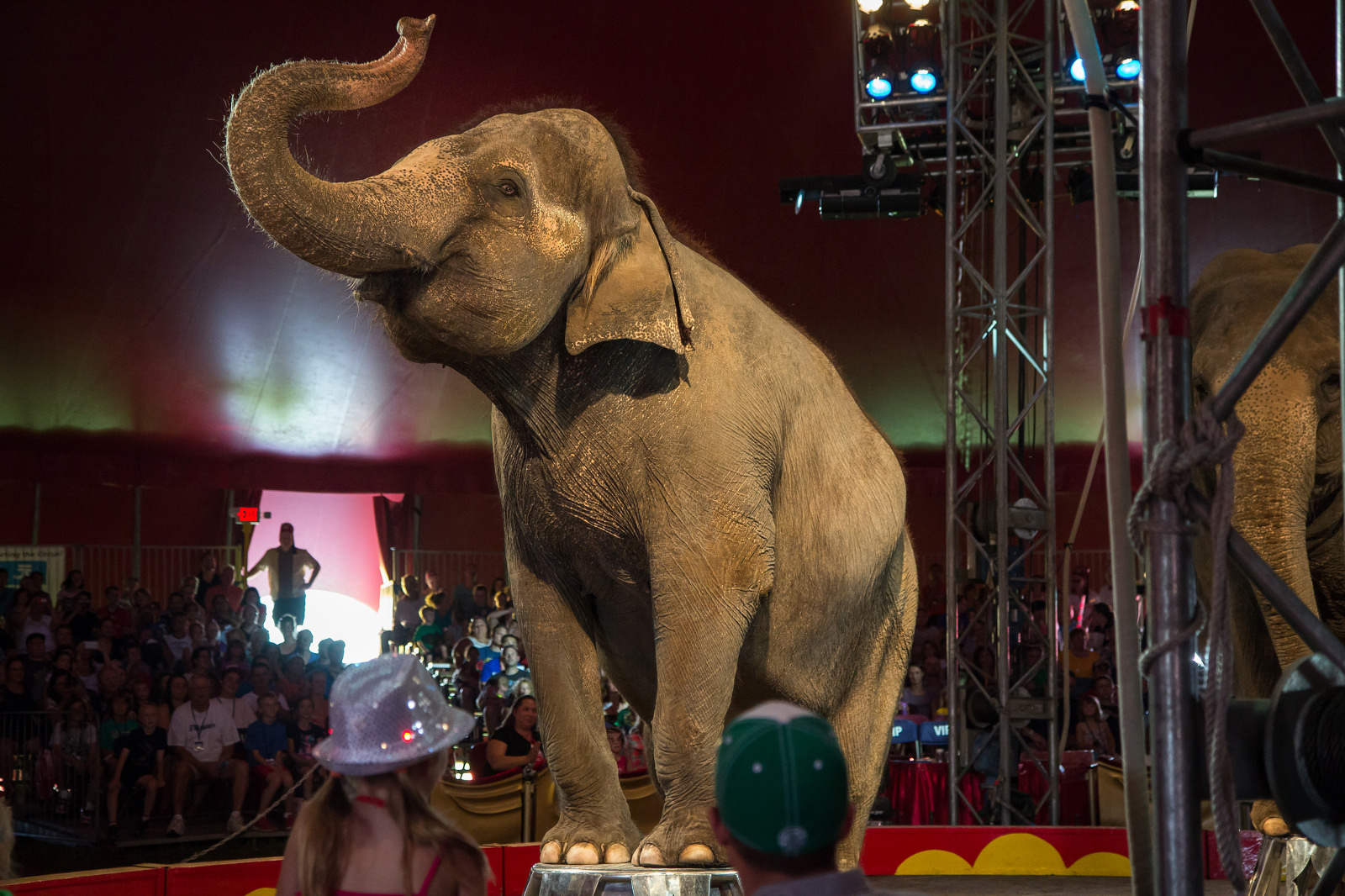 Circus Tricks and TV Stunts: How the International Zoo Association Defines 'Education'