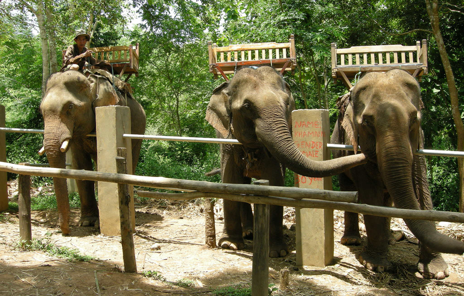 Don't Be Fooled Into Animal Abuse! Elephant Attractions to Avoid