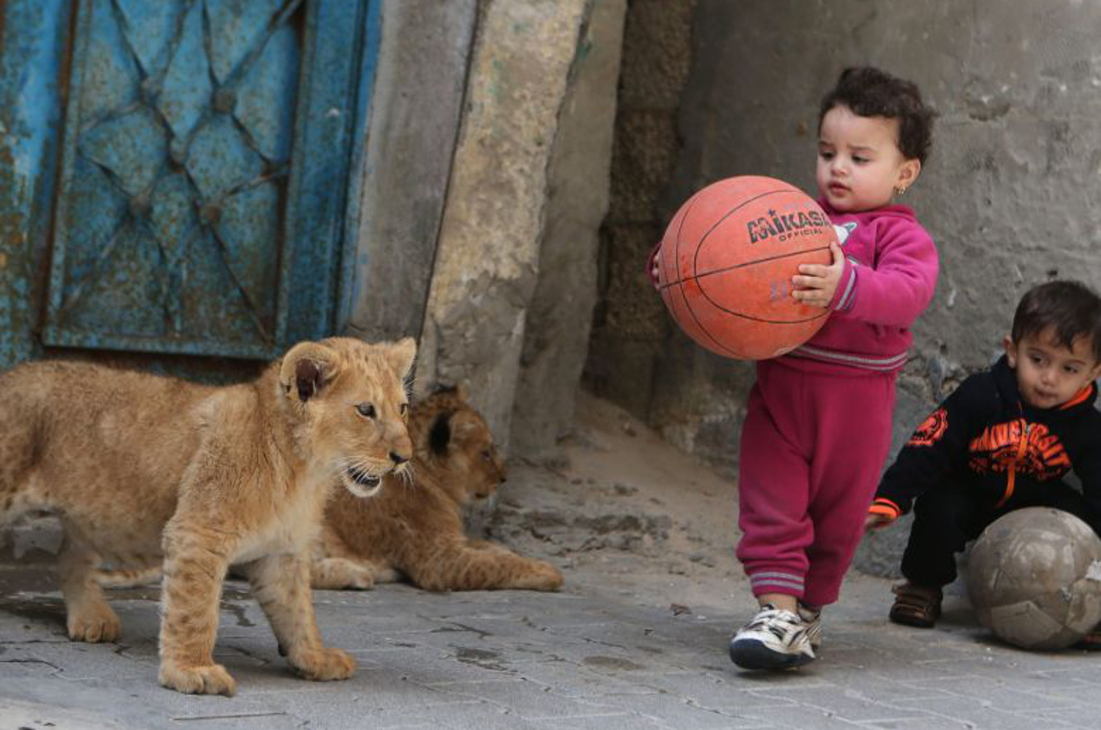 Gaza Lion Cubs Rescued From Life as Pets, But Our Work Isn't Over Yet