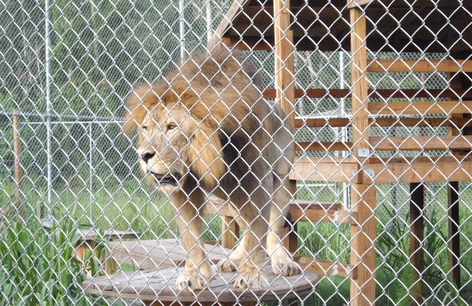 How to Tell the Difference Between a Credible Exotic Animal Sanctuary and an Abusive Animal Attraction