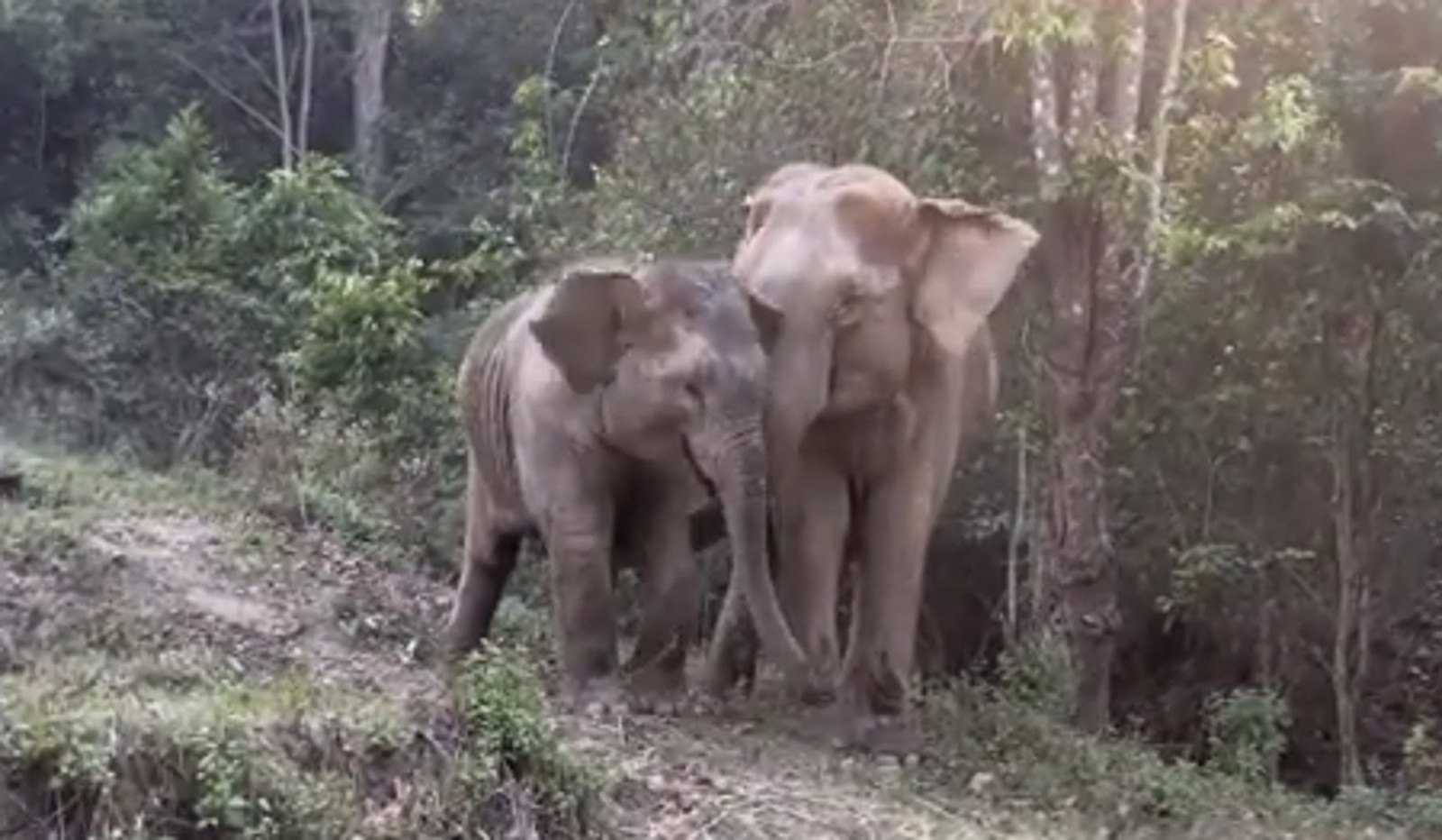 onegreenplanet.org - Baby Elephant Reunited With Mother After Being Separated by the Tourism Industry for 3 Years! (VIDEO)