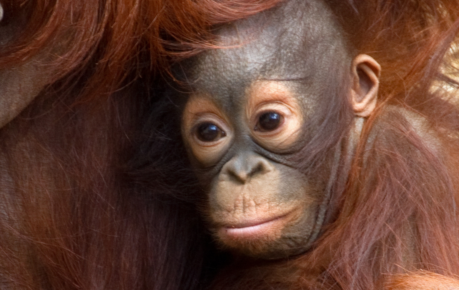 Snacking Smarter: How Rethinking Palm Oil Can Save Animals and the Environment