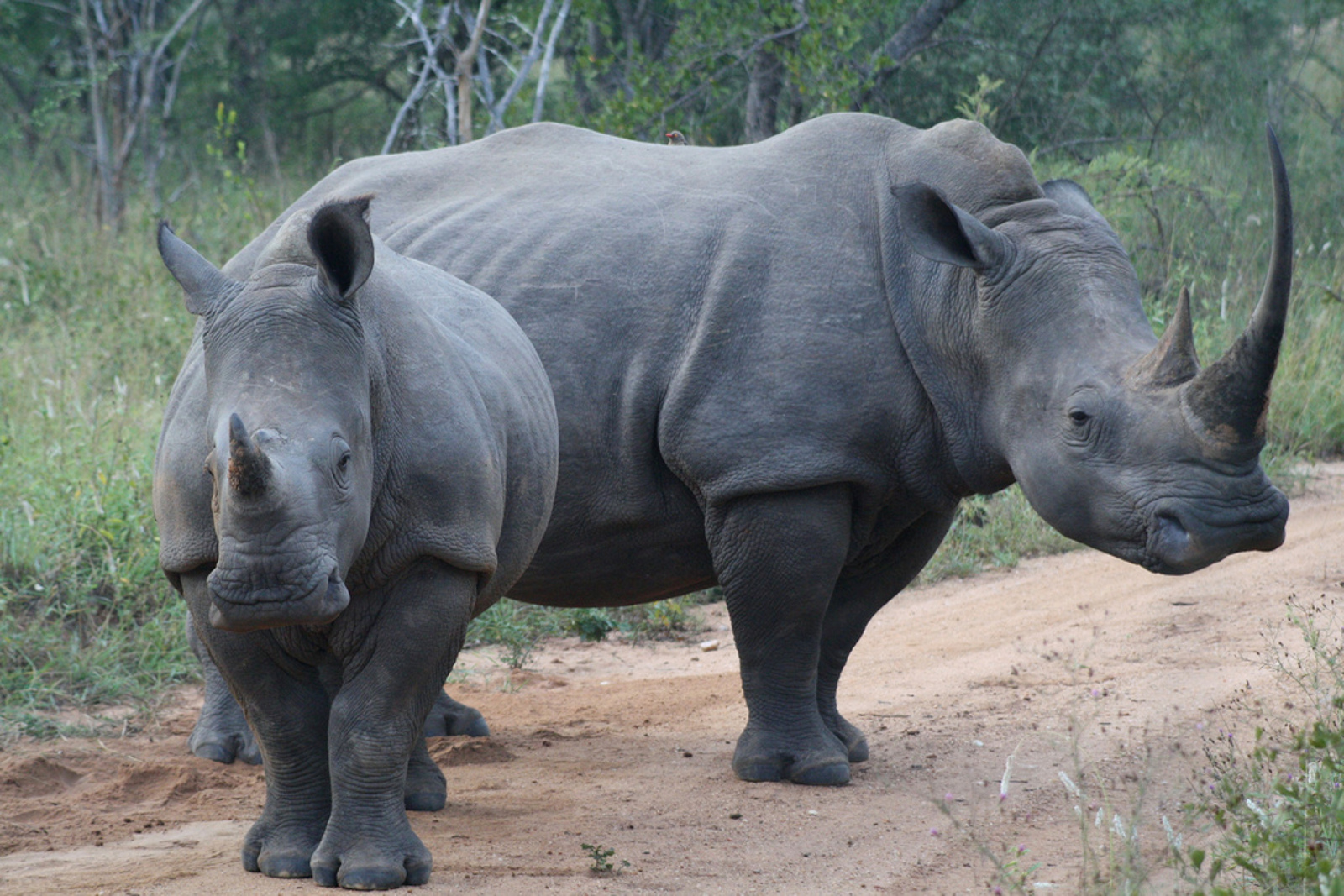 Recent Victories Show Momentum in the Fight Against the Illegal Wildlife Trade