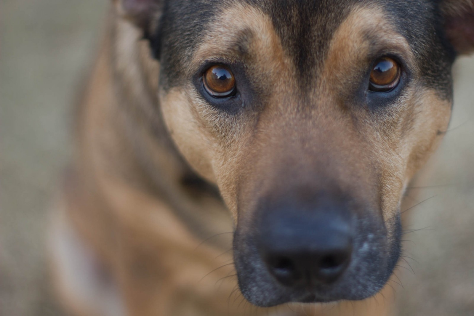 Four Ways That Everyone Can Help Nervous Dogs To Feel Safe