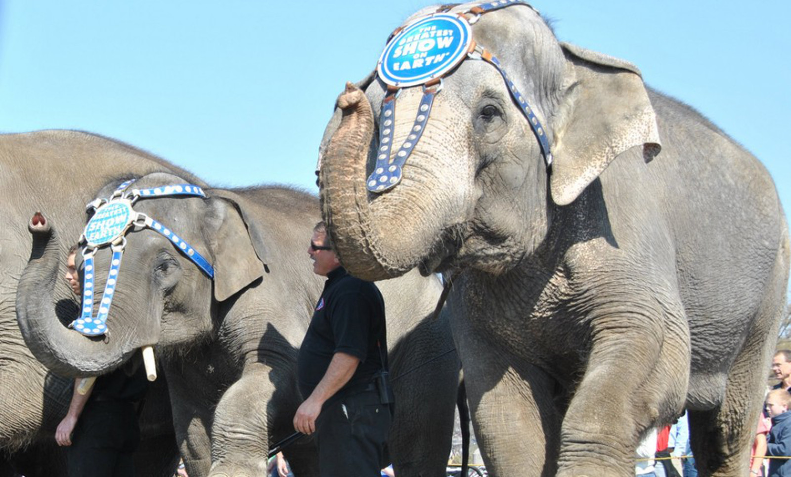 Is the Tide Against Live Animal Circuses Turning? 3 Recent Victories to Celebrate