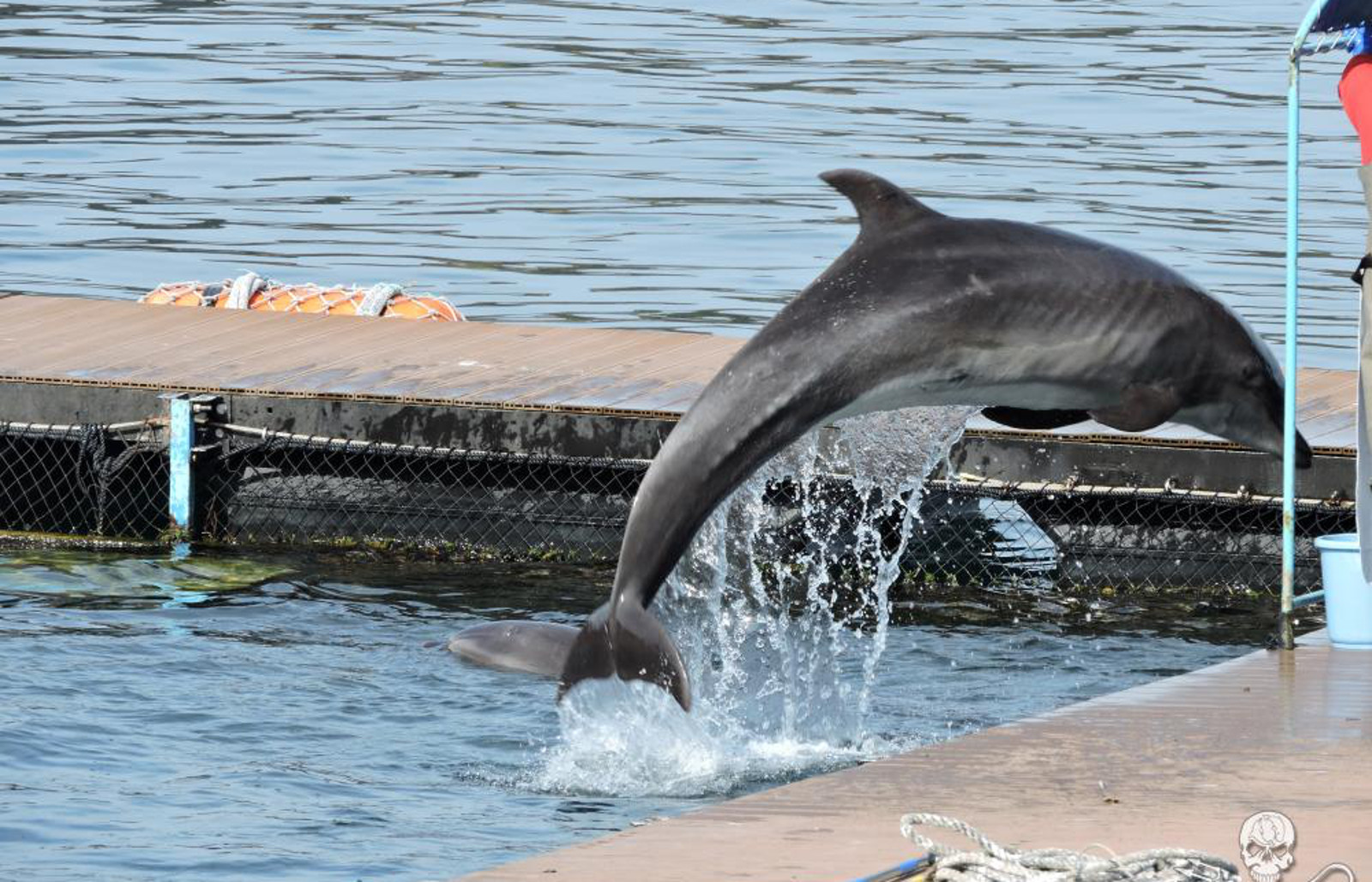 Could the Beginning of the End for the Dolphin Slaughter in Taiji be in Sight?