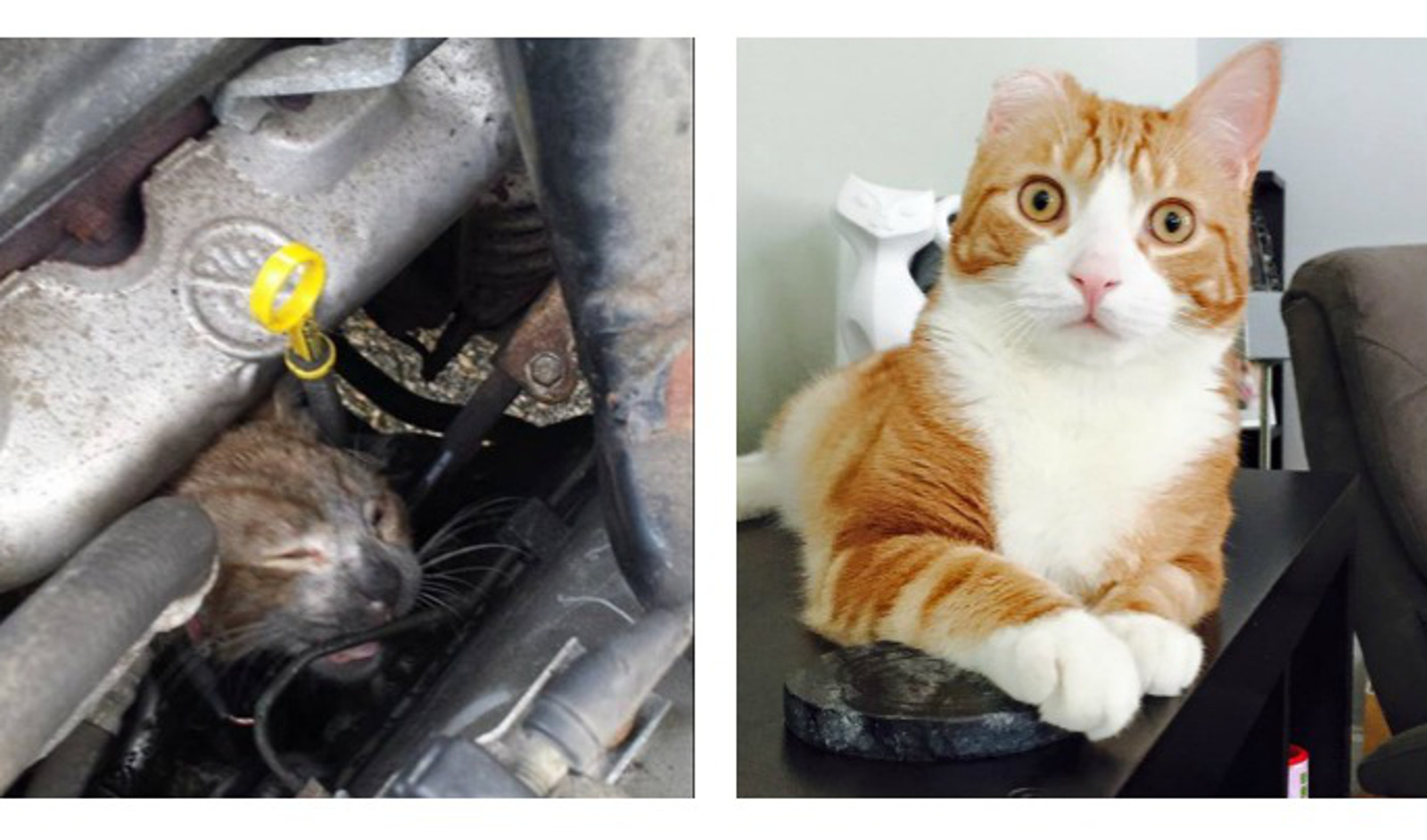 10 Before-And-After Photos of Rescued Animals That Will Restore Your Faith in Humanity