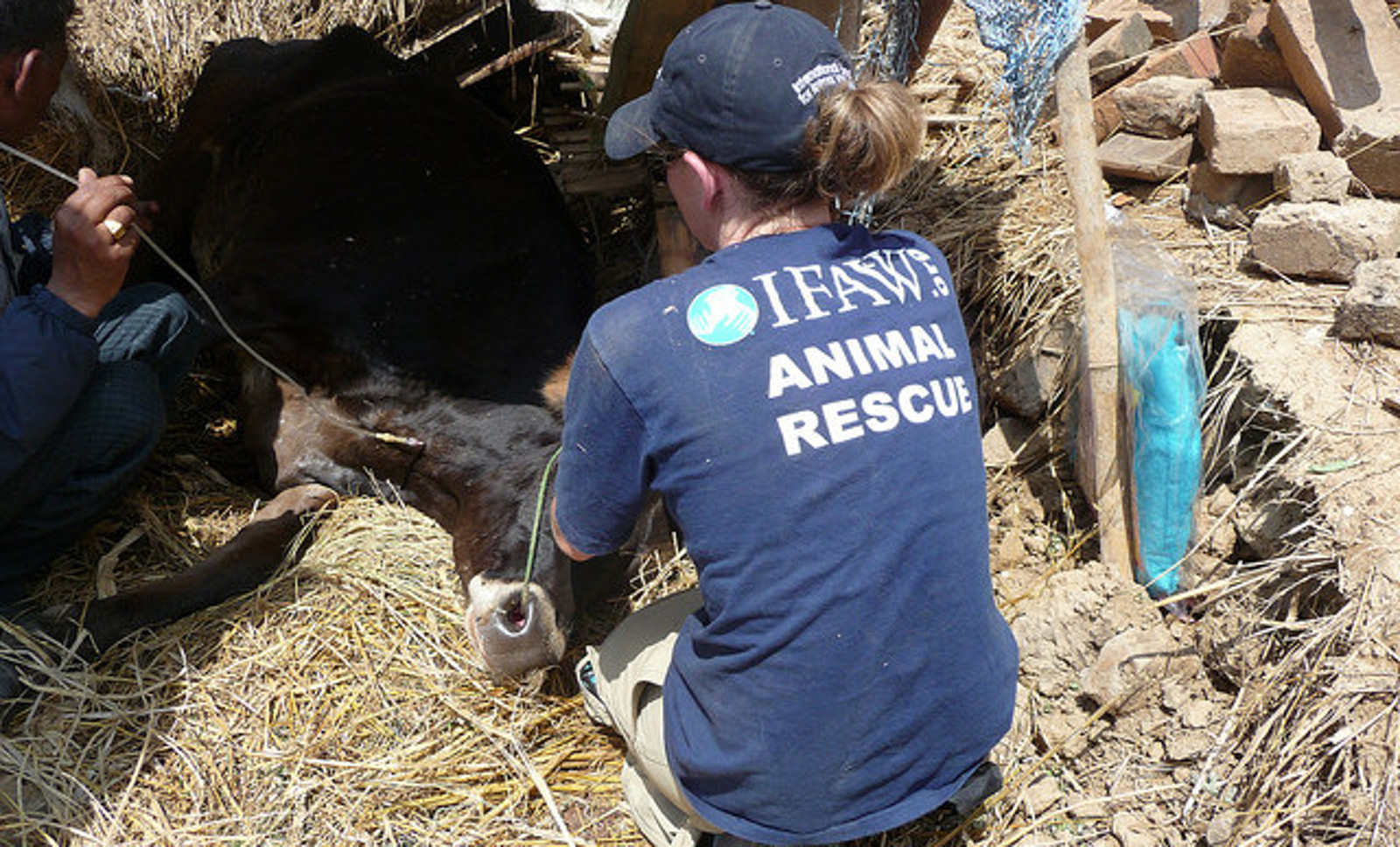 Holding a Helpless, Injured Cow, I Survived the Second Earthquake in Nepal