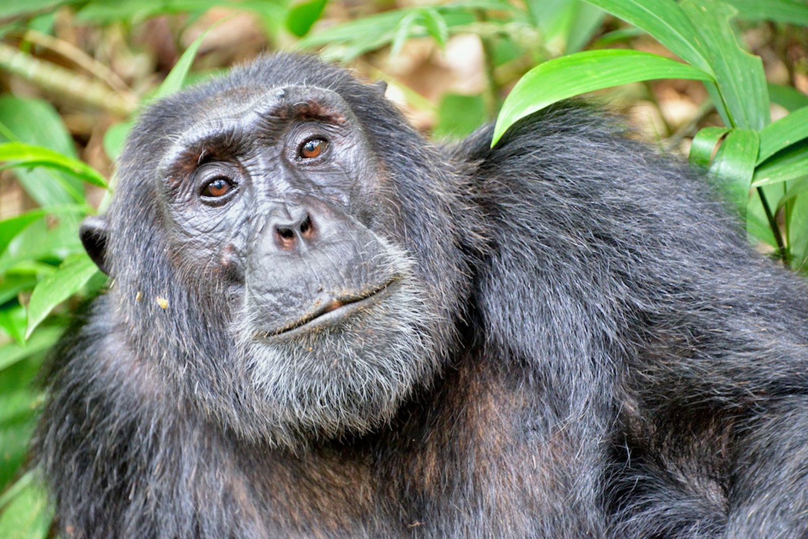 Advancing the Law for Great Apes: Legal Personhood
