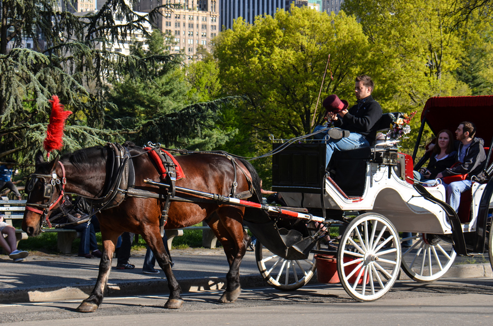 Can Horse Carriages Ever Really Be Romantic?