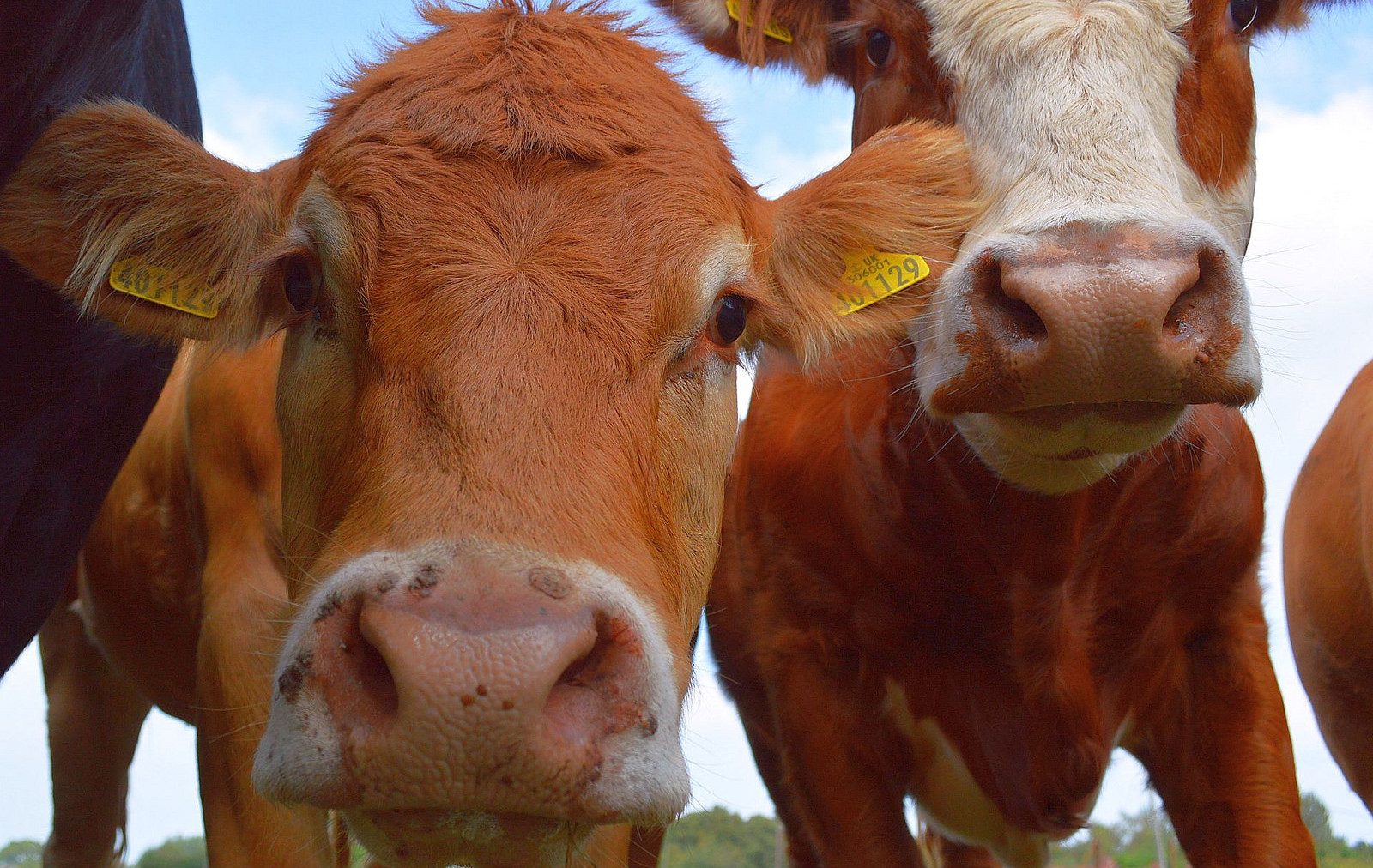 Sorry Hipsters, Grass-Fed Beef is Just as Bad for the Planet as Grain-Fed