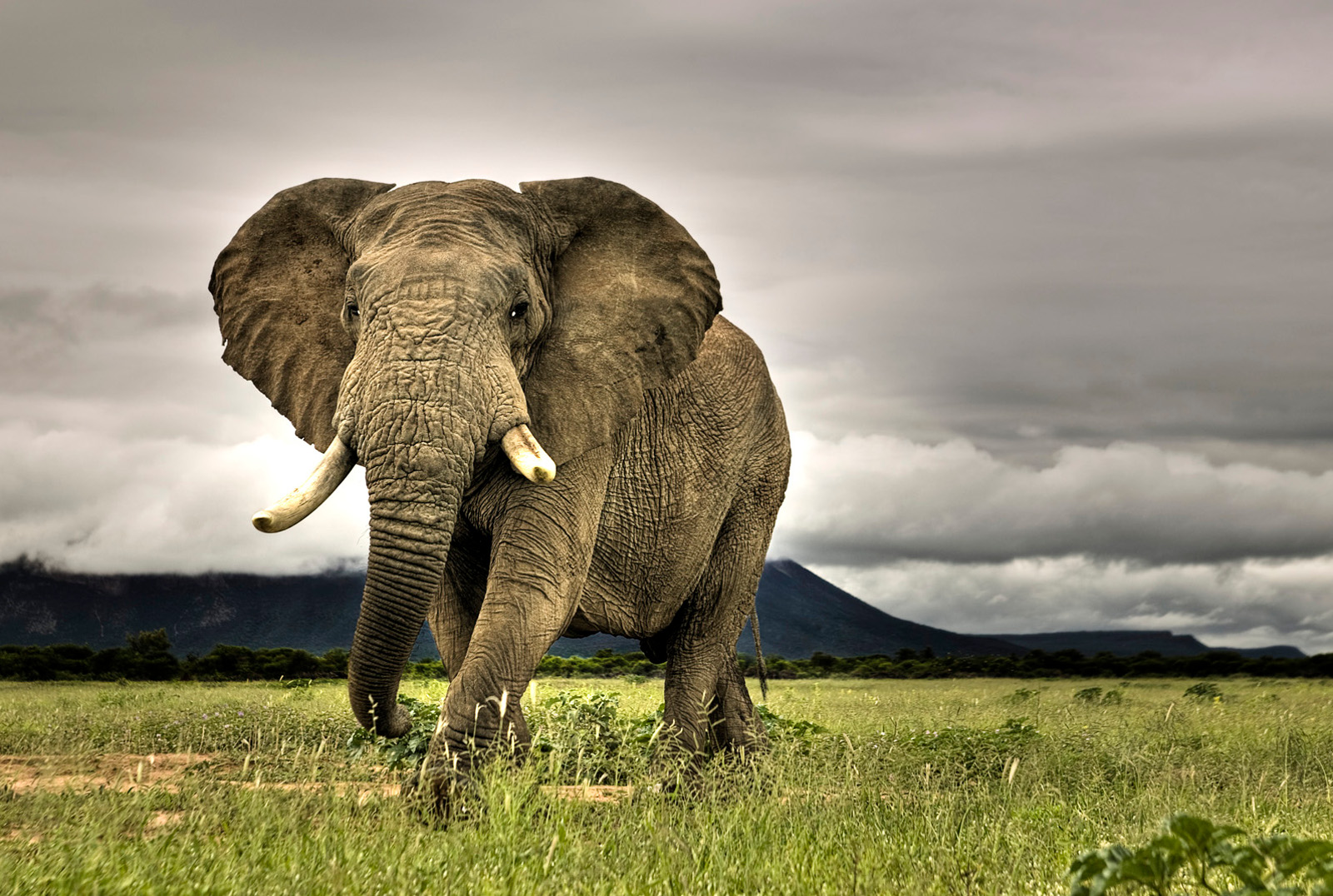Habitat Loss: The Silent Killer of African Elephants