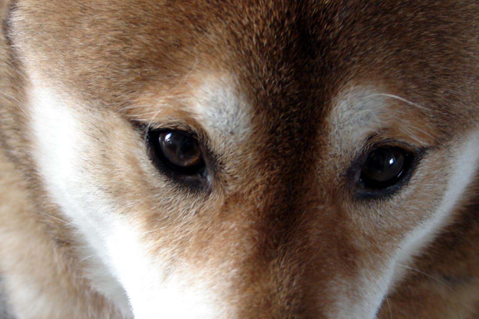 Amidst All the Cruelty of the Dog and Cat Meat Trade, There is Reason for Hope