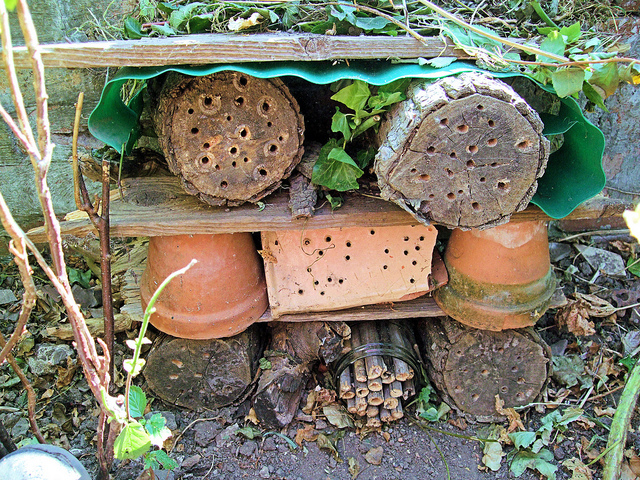 What is an Insect Hotel, How to Build One and Why You'd Want to