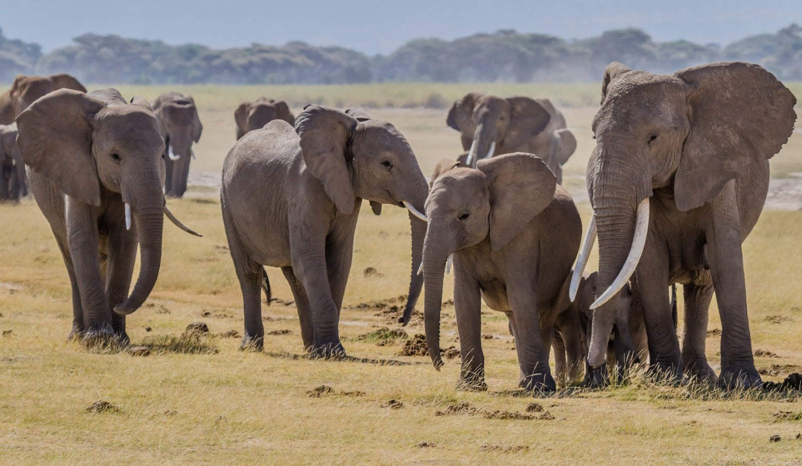 Signs the Ivory Trade is Losing Popularity