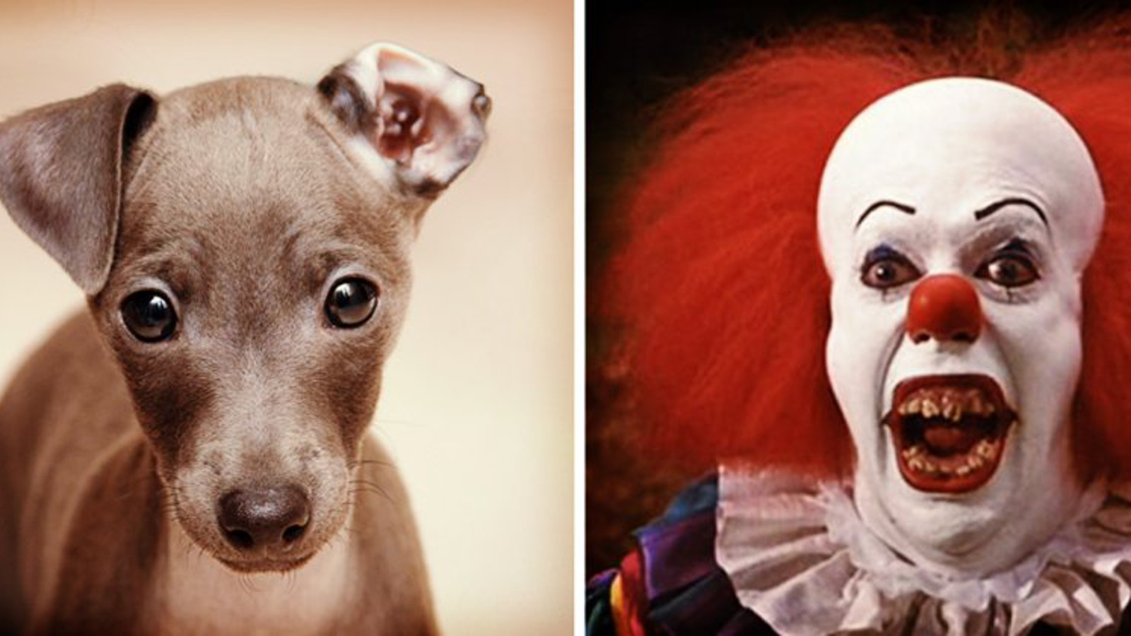 10 Ways Greyhound Racing is Scarier Than a Stephen King Film