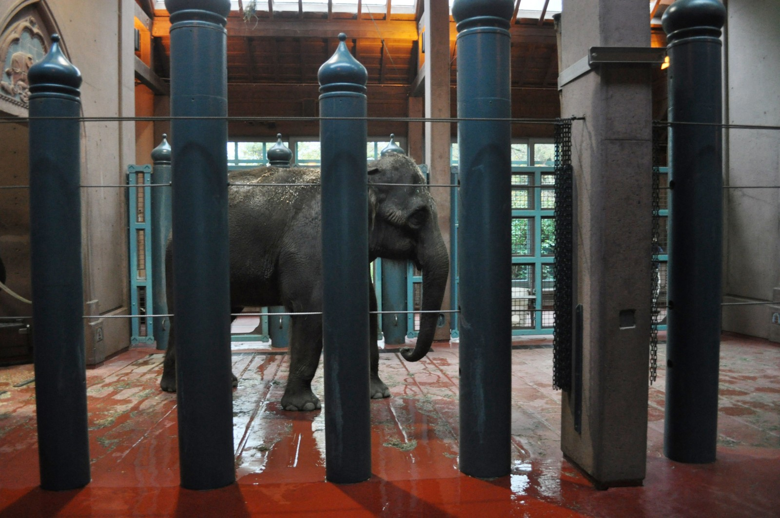 Chai and Bamboo: Seattle's Elephants Have Left The Emerald City But Their Sad Saga Isn't Over