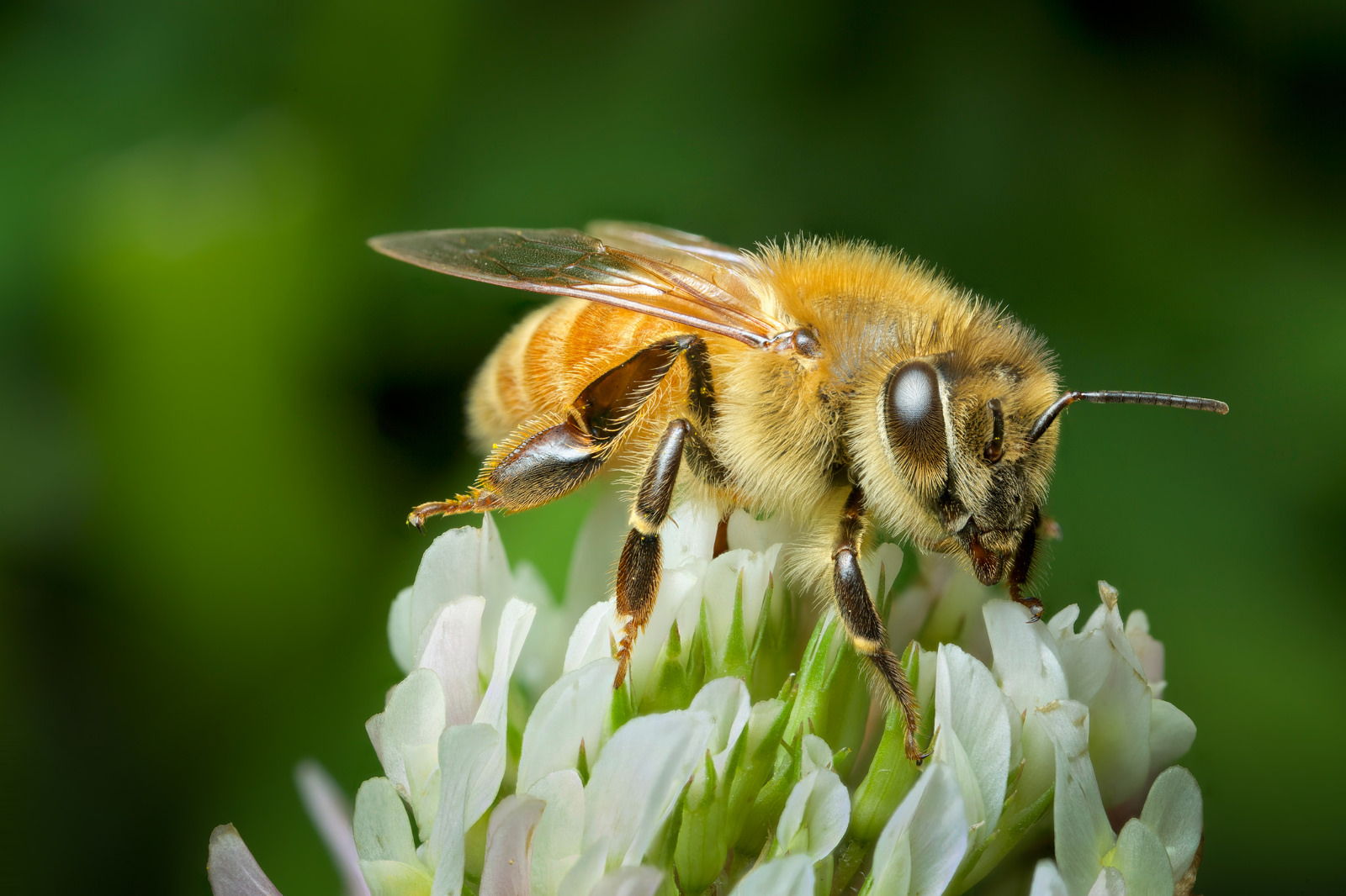 10 Ways to Save Pollinators and Protect Our Food Supply