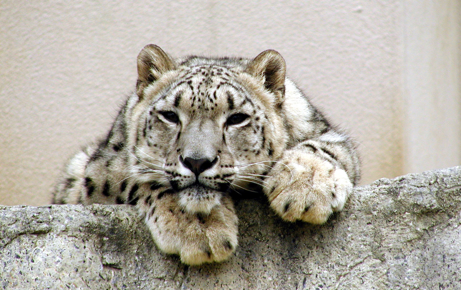 """Do Animals in """"Reputable"""" Zoos Suffer Any Less Than Those in Roadside Zoos?"""