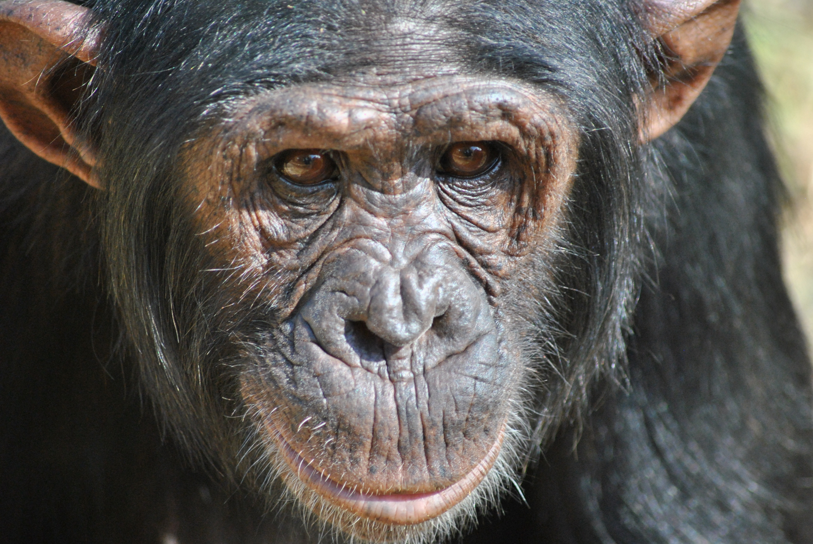 Bridging the Gap Between Animals Rights and Civil Rights: Hope We're Making Progress
