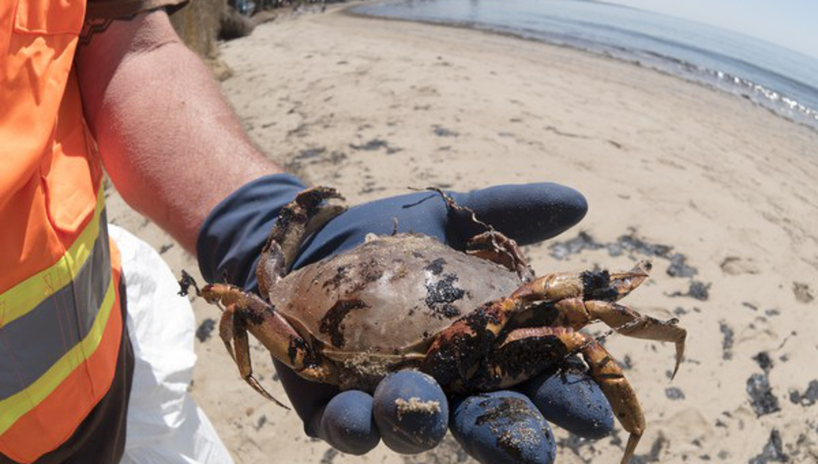 Have We Learned Anything From the Santa Barbara Oil Spill?