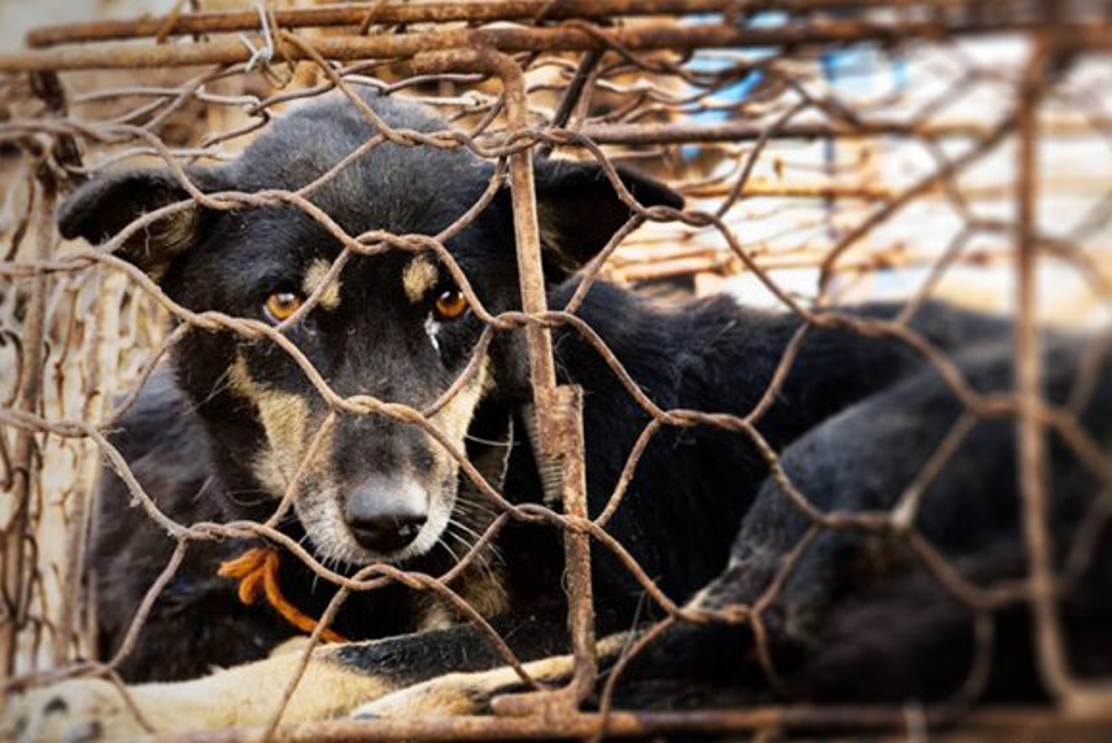 How the Yulin Dog Meat Festival is a Wake Up Call for the World